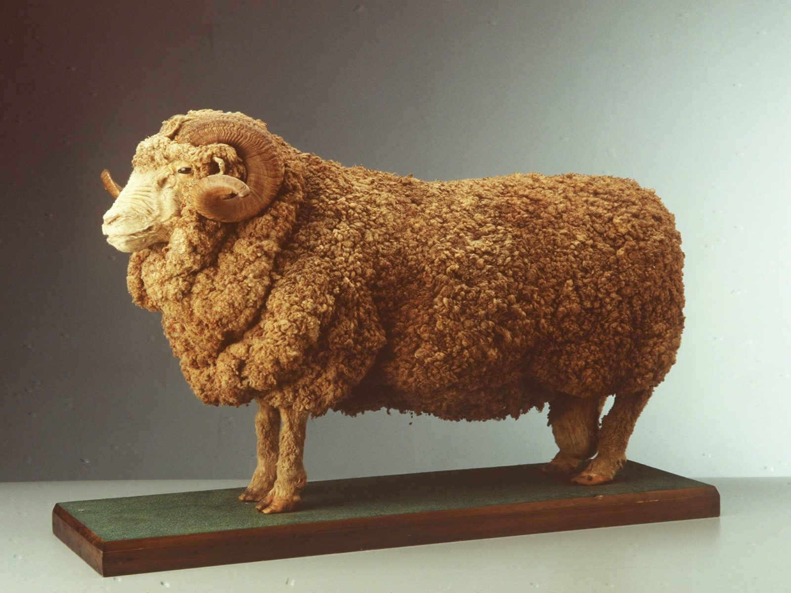 Back to Back Wool Challenge