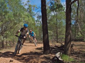 Back Yamma State Forest