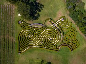 An aerial view of the Bago Maze