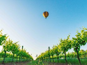 Balloon over the Mudgee Vineyards