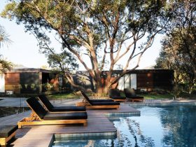 Resort pool and deck chairs under the canopy of a large Eucalypt tree