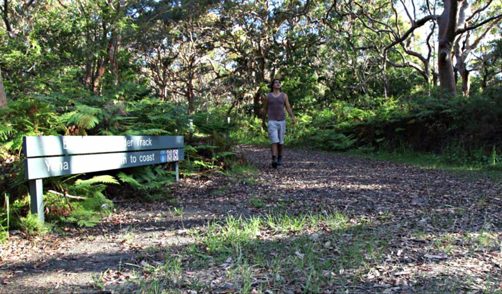 Banks-Solander track, Kamay Botany Bay National Park. Photo: Andy Richards