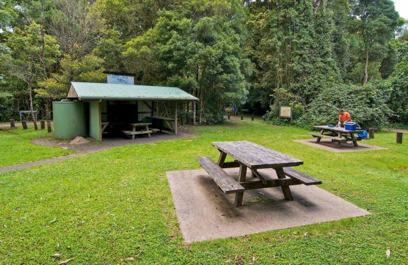 Bar Mountain picnic area, Border Ranges National Park. Photo: John Spencer