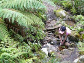 Barokee to Native Dog Creek walk