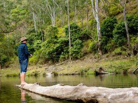 Fishing in the Macleay River near Bass Lodge