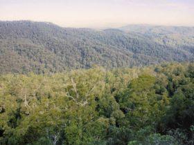 Beech Lookout, Cunnawarra National Park. Photo: Tony Karacsonyi