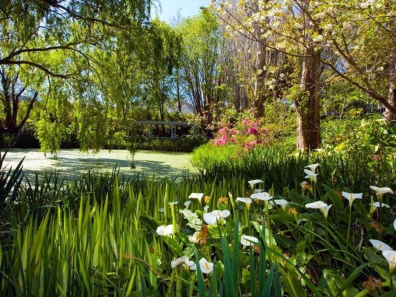 The beautiful Foxglove Spire Gardens