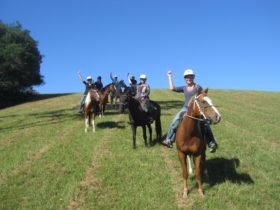 Port Macquarie Horse Riding