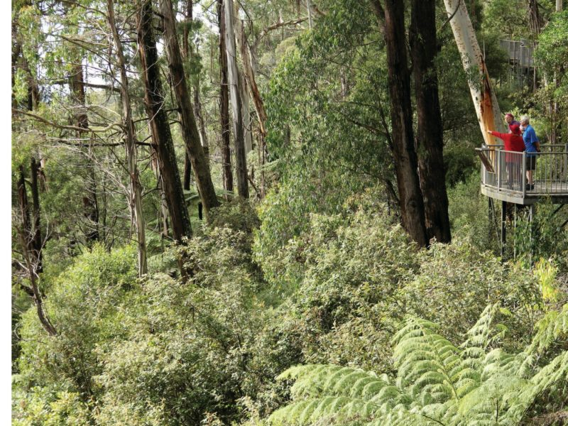 Pipers lookout, South East Forests National Park