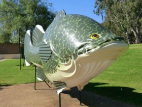 Big Murray Cod - Courtesy Tocumwal on the Murry Website