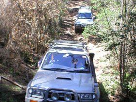 Mount Yengo Loop Trail, Yengo National Park. Photo: NSW Government