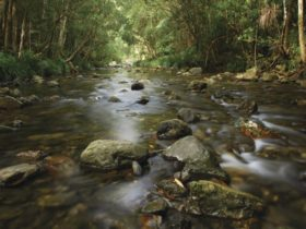 Bindarri National Park