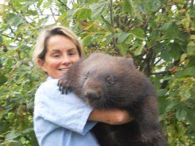 Willow the wombat loves a cuddle.