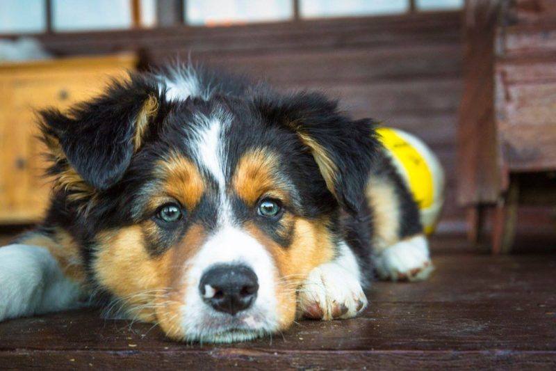 Max, their cellar dog