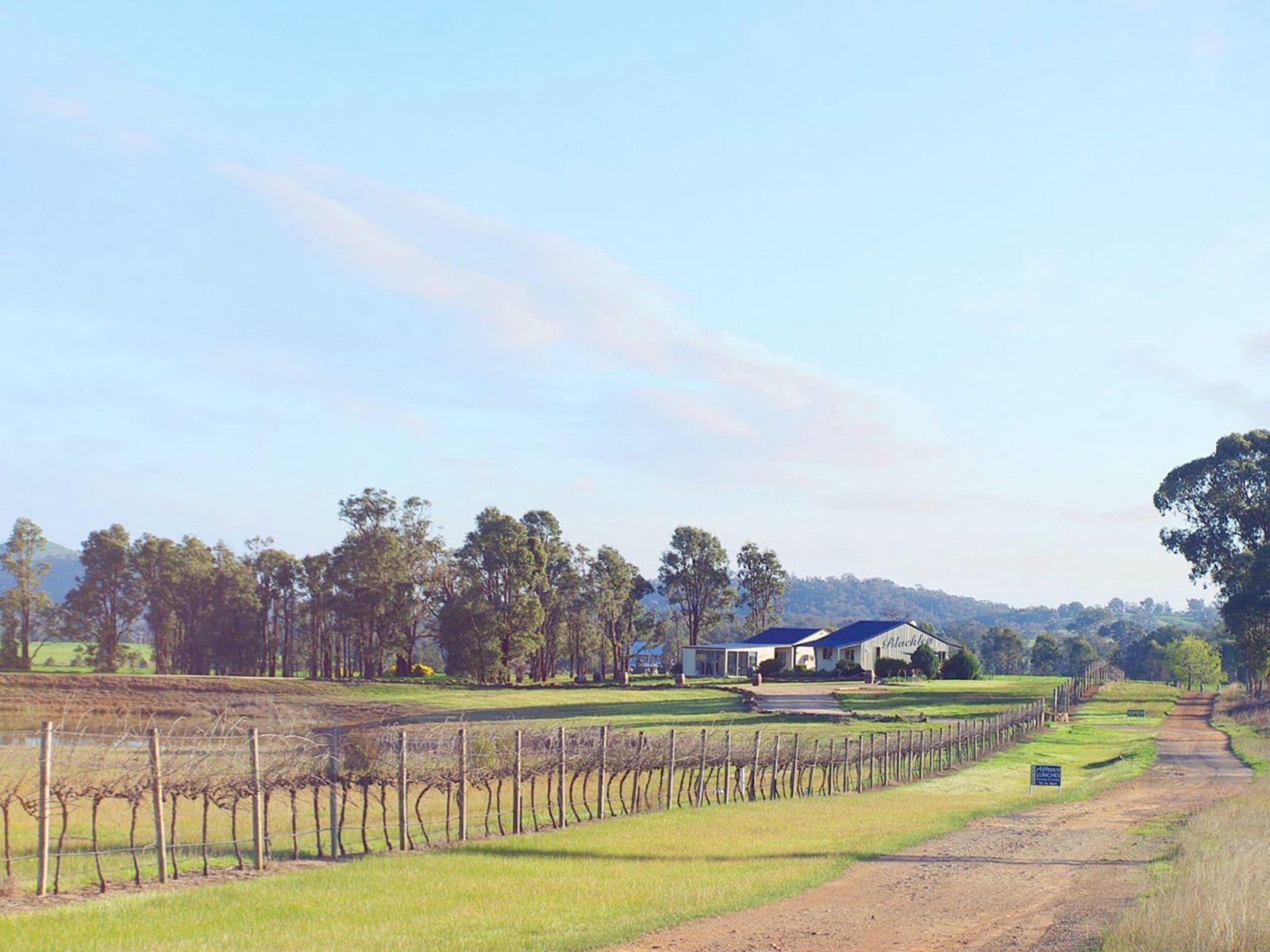 Blacklea Vineyard and Olive Grove
