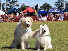 Blacktown Pet Festival