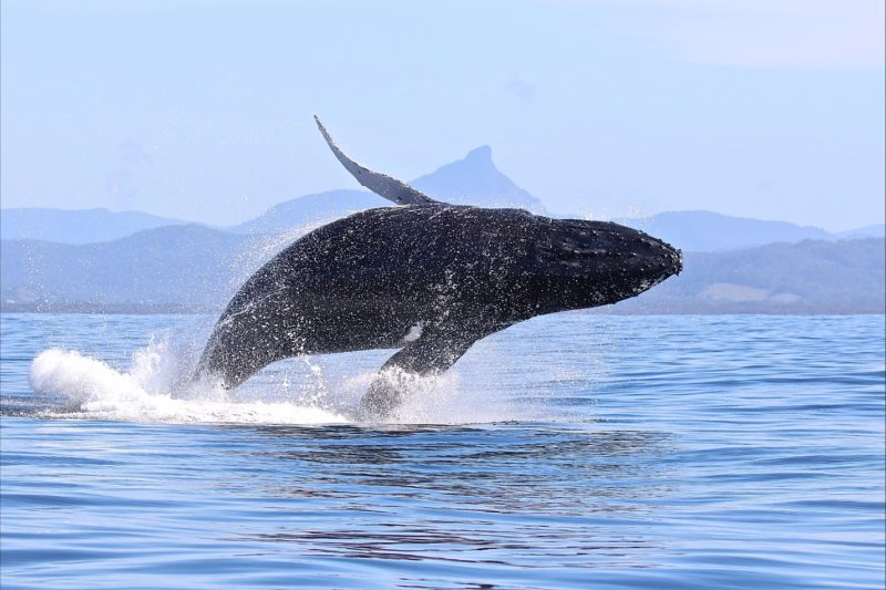 Blue Bay Whale Watching