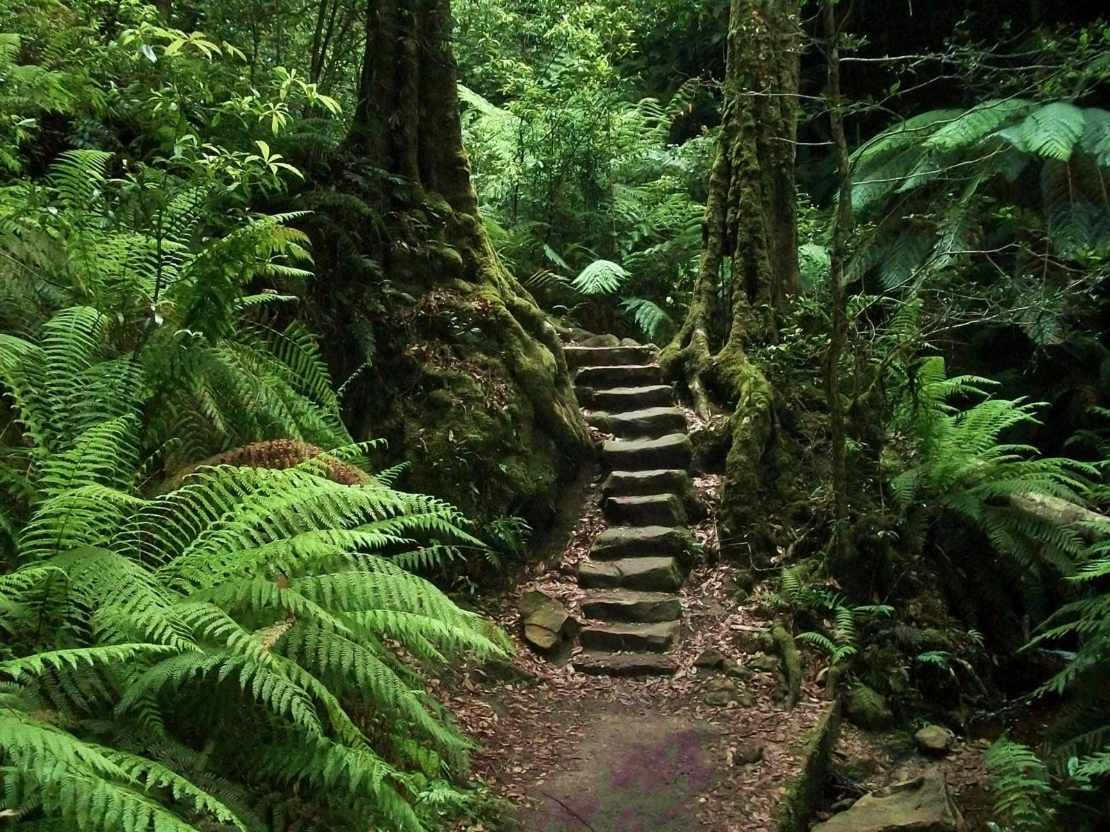 Blue Mountains Guides provide adventure tours and activities