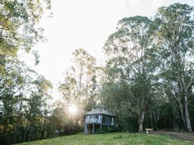 The Nests at Bluegums