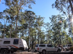 Bodalla State Forests can accommodate caravans and campervans