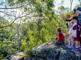 Bomaderry Creek Bushwalk