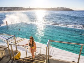 Early morning swimmers at Bondi Icebergs Club