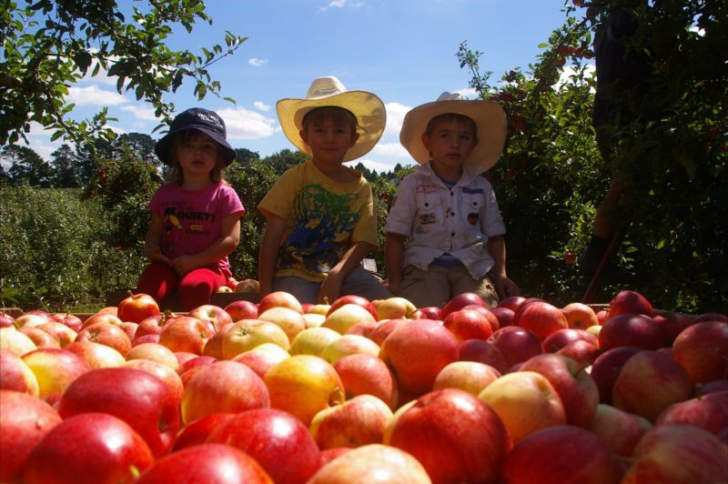 Bonny Glen Fruits