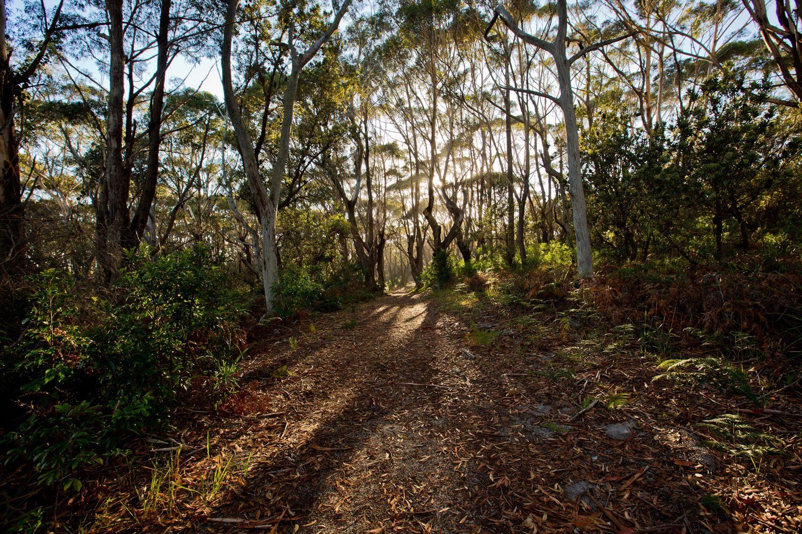 Munyunga Waraga Dhugan Walking Trail, Booderee National Park