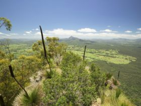 Pinnacle lookout, Border Ranges National Park. Photo: Hamilton Lund