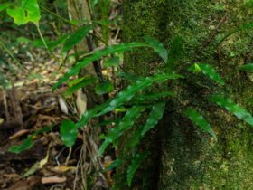 Botanic walk hero, Willi Willi National Park. Photo: John Spencer