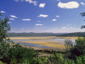Bournda National Park. Photo: A Brown/NSW Government