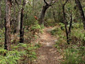 Box Head track, Bouddi National Park. Photo: John Yurasek