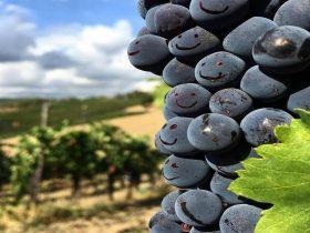 Boydells Wine