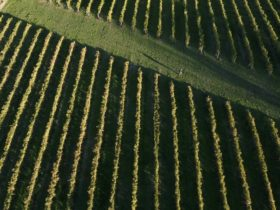 Vineyard views from above, at Ynys Witrin our second vineyard location.