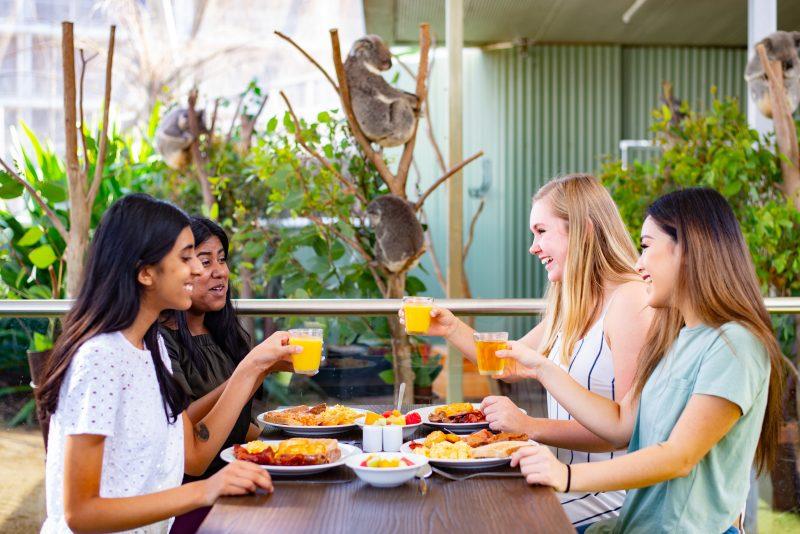 Breakfast with Koalas