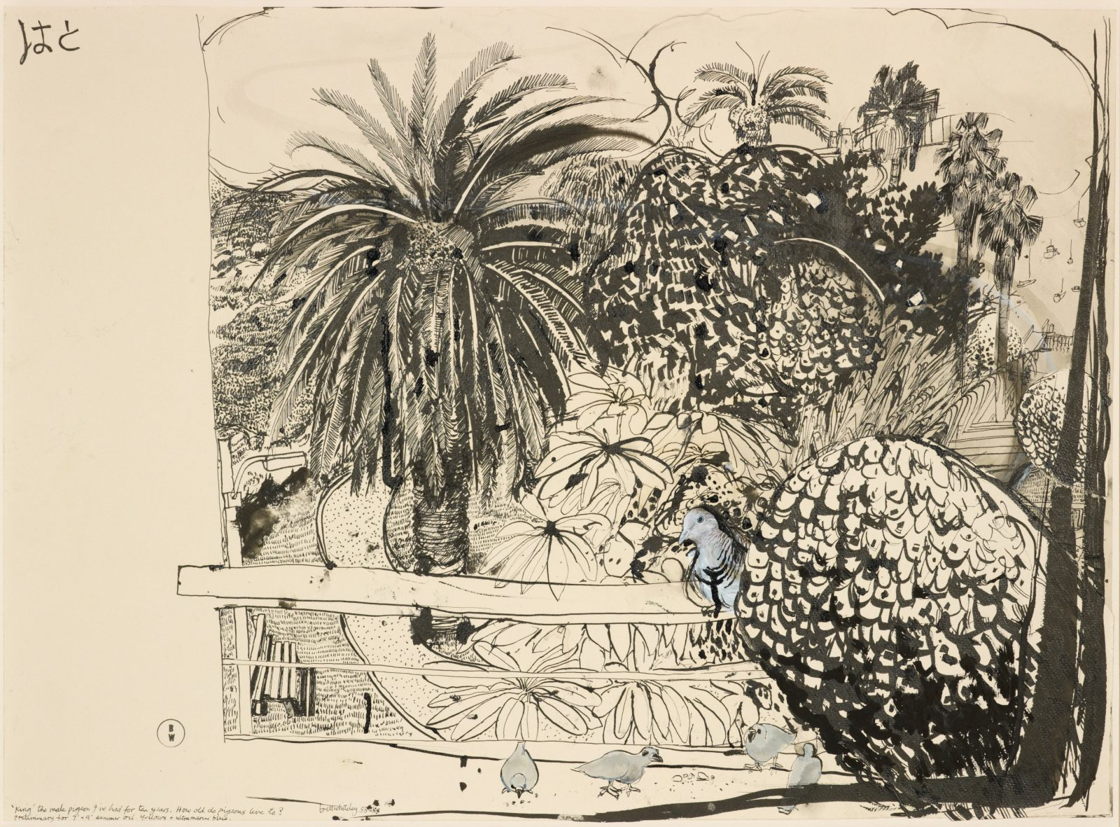 Brett Whiteley drawing of a pigeon on the balcony of his Lavender Bay home