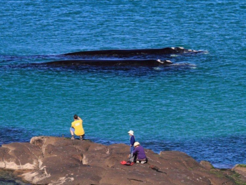 Whales off Broulee Island