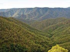 Oxley Wild Rivers National Parks. Photo: Rob Cleary/NSW Government