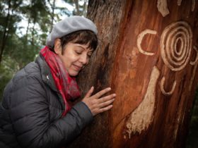 Bulahdelah Mountain Aboriginal Place tree carving