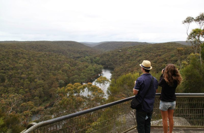 Bungoona path, Royal National Park. Photo: Andy Richards/NSW Government