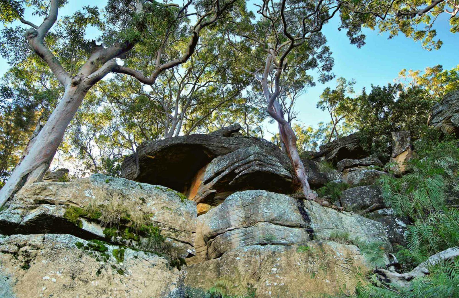 Burrawang Reach Picnic Area