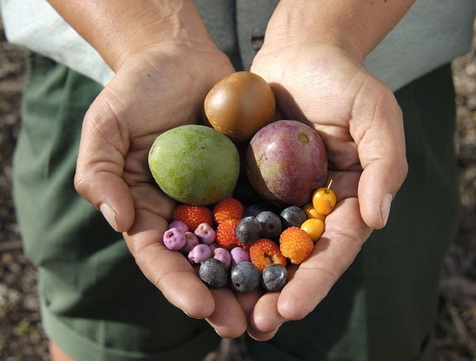 Aboriginal bush food experience - bush berries