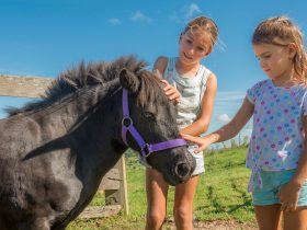 Horses at Byron Bay Farmstay