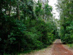 Cambridge Plateau Scenic Drive, Richmond Range National Park. Photo: J Atkins/NSW Government