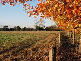 Autumn leaves on Camden Valley Way