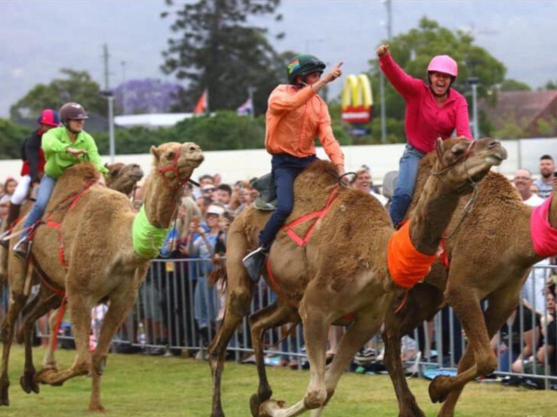 Camels Penrith