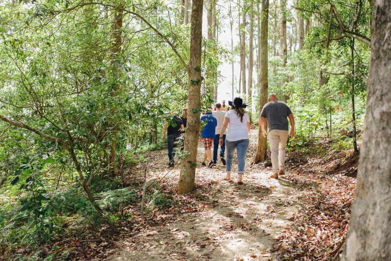 Rainforest walk at Cape Byron Distillery