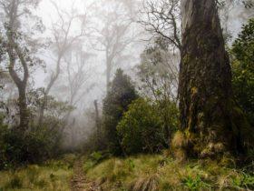 Careys Peak trail, Barrington Tops National Park. Photo: John Spencer/NSW Government