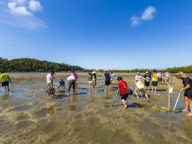 Catch A Crab At Birds Bay Oyster Farm
