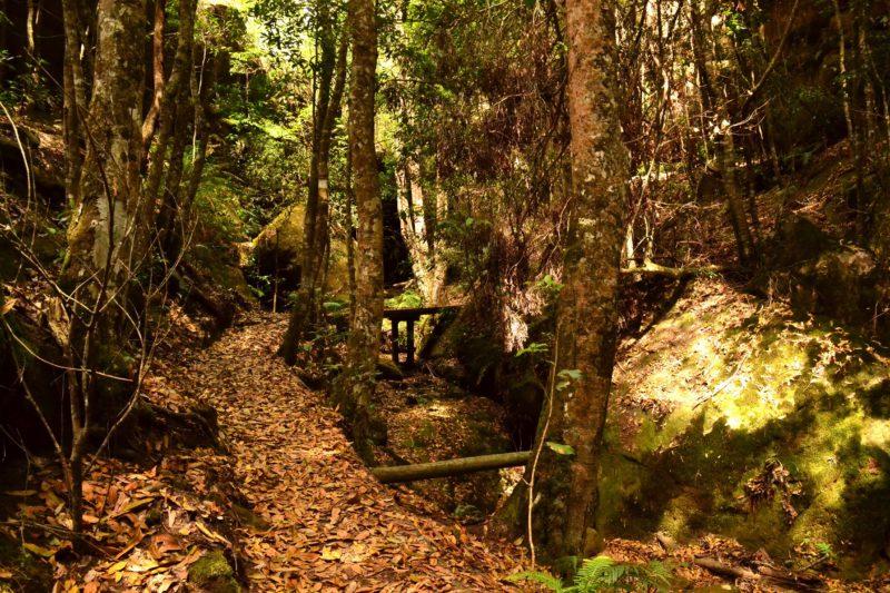 Cave Creek Track